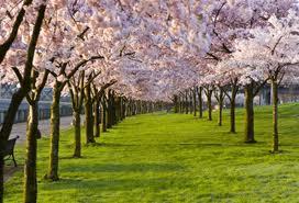 impermanence practice 2 spring