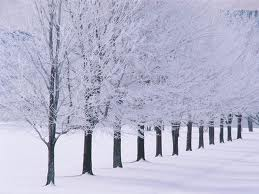 impermanence practice 3 winter